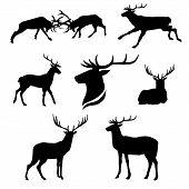 picture of animal silhouette  - Deer set of black silhouettes - JPG