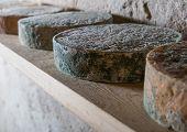 pic of basement  - Goat cheese maturing in basement - JPG