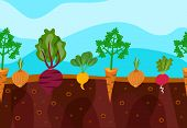 picture of root vegetables  - Vegetables decorative icons set growing in garden soil vector illustration - JPG
