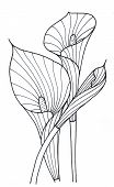 stock photo of calla  - Elegant calla lilies painted Liner simple black and white drawing - JPG