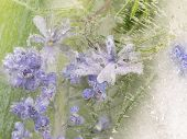 stock photo of fragile  - abstraction of small light lavender fragile delicate wildflowers frozen in the ice on a green organic background with bubbles of air - JPG