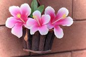 image of hibiscus flower  - still life flowers Pink Hibiscus flowers in a basket and wall surface - JPG