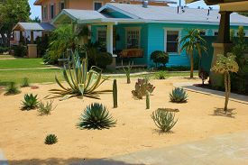 foto of drought  - Drought tolerant cactus and plants taken in the front yard of an older home in drought stricken California - JPG