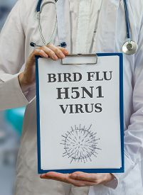 image of avian flu  - Doctor is warning against bird flu H5N1 virus written on clipboard - JPG
