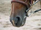 Horse wearing D-ring snaffle bit