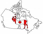 pic of caribou  - Detailed and colorful illustration of canadian Caribou - JPG