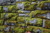 The Old Stone Wall