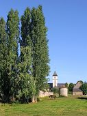 Poplars and church at Conlie in France