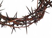 foto of humility  - Crown of Thorns against white background  - JPG