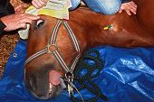 horse operation