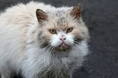 Dirty Homeless Cat With An Unhappy Look poster