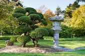 Stone Lantern And Pruned Bonsai Tree At Japanese Garden
