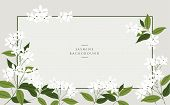 Vector Jasmine Flower Banners. Design For Tea, Natural Cosmetics, Beauty Store, Organic Health Care  poster