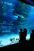 Постер, плакат: Family Looks At Sharks In Beautiful Blue Aquarium Young Woman With Her Baby Watches A Fish In Aquar