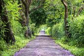 The Long Way Of Road Beside Big Green Trees Like Tree Tunnel Way. Tanzania, Africa. poster