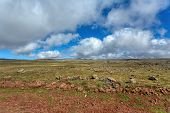 Beautiful Landscape Of The Ethiopian Bale Mountains National Park. Ethiopia Wilderness Pure Nature.  poster