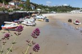 Wild Flowers With Soft Focus View Of Beach, Small Boats And Village Of St Brelade, Jersey, Channel I poster