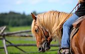 Horse Western
