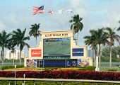 Horse Racing At Gulstream Park Near Miami