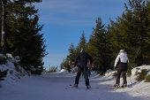 Two People On Skis Climb The Hill On A Path In The Forest. Active Skiing In The Mountains. Active Wi poster