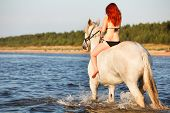 stock photo of shire horse  - Woman with big white horse bathing horse in sea - JPG