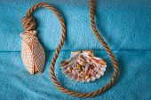 Rope and shells