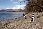 Dogs By The Lake