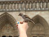 Bird On Notre Dame