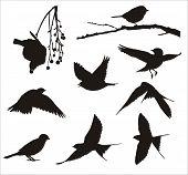 Pássaros de canção