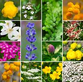 Fresh Medicinal Aromatic, Plant, Flowers - Collection Set