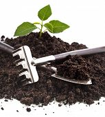 gardening tools and seedling in soil isolated on a white background