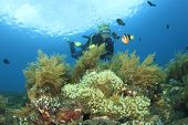 Scuba Diving on coral reef with anemonefish
