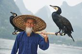 Chinese senior fisherman man with cormorants birds trained  to fish in Yangshuo, Guangxi region, China before traditional fishing