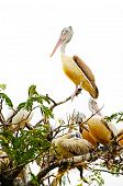 image of adversity humor  - the Birds on tree with white background - JPG