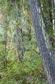Okanogan-Wenatchee National Forest, Washington State, USA