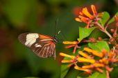 Essen Schmetterling
