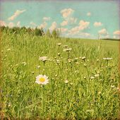 Daisy field and blue sky  in grunge and retro style.