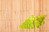 Green Branch Of Fern On Wooden Bamboo  Background