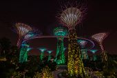 SINGAPORE -JANUARY 26: Night view of Supertree Grove at Gardens by the Bay on Jan 26 2014 in Singapo