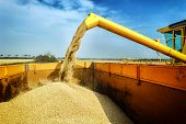 foto of combine  - Wheat harvesting combine at autumn agricultural field - JPG