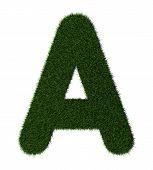 Grass alphabet-A