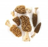 stock photo of morchella mushrooms  - Group of morel mushrooms isolated on white background - JPG