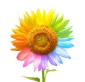 Постер, плакат: Цвета