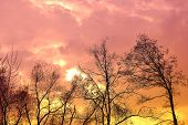 Fantastic Dramatic Pink and Gold Sky with Outlines of Trees