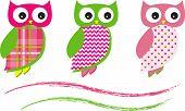 Cute Owl Vectors