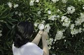 foto of oleander  - Woman botanist watching the white oleander flowers on the tree with magnifying glass - JPG