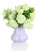 stock photo of hydrangea  - White Hydrangea in vase isolated on white - JPG