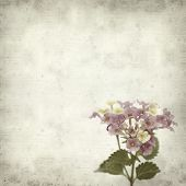 pic of lantana  - textured old paper background with pink and yellow Lantana flowers - JPG