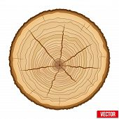 Cross section of tree trunk. Vector.