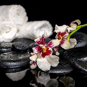 Spa Concept Of Orchid Cambria Flower With Drops And White Towels On Zen Stones On Reflection Water,